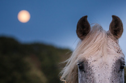 supermoon in the year of the horse