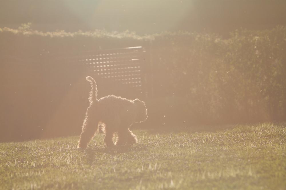 backlight puppy