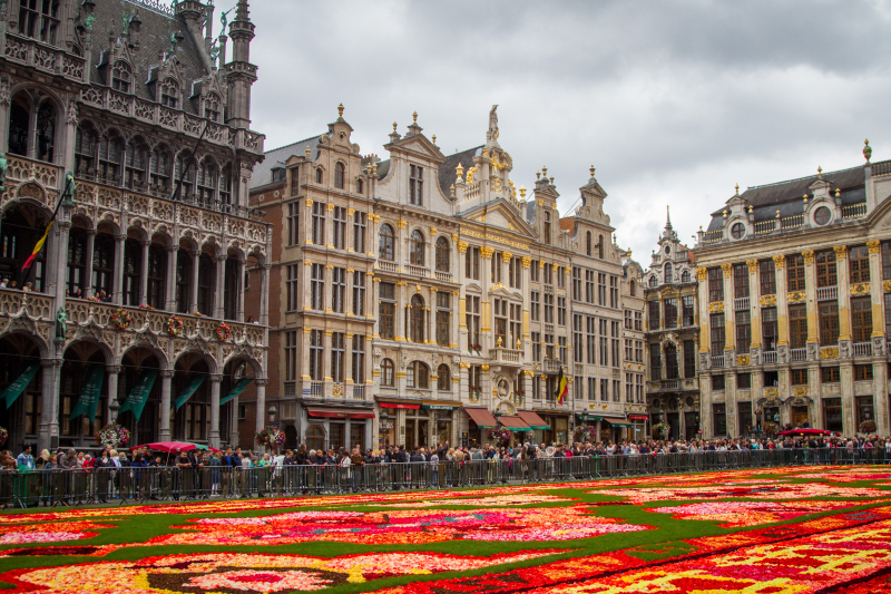 Greetings from Brussels, Belgium  This is a photo of the [i]fleur de tapis[/i] (flower carpet) in the Grand Place of Brussels Belgium.  Every 2 years, a huge display of over a million begonias is laid out in the middle of this large town square. The display lasts only a few days and thousands of people come to see the design.   The design is based on a theme. For 2014, the theme was dedicated to 50 years of Turkish immigration to Belgium and the pattern was created to look like a Turkish rug design.  This photo was taken on ground level. It's also possible to go into one of the town square buildings to see the design from a higher vantage point. But this year I brought my dogs and didn't get a chance to view it from above.