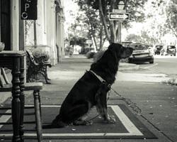 elliott street charleston