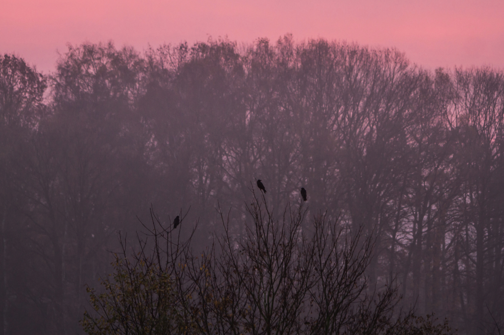 sunrise crow