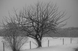 Belgium winter