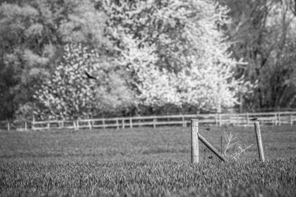 springtime field