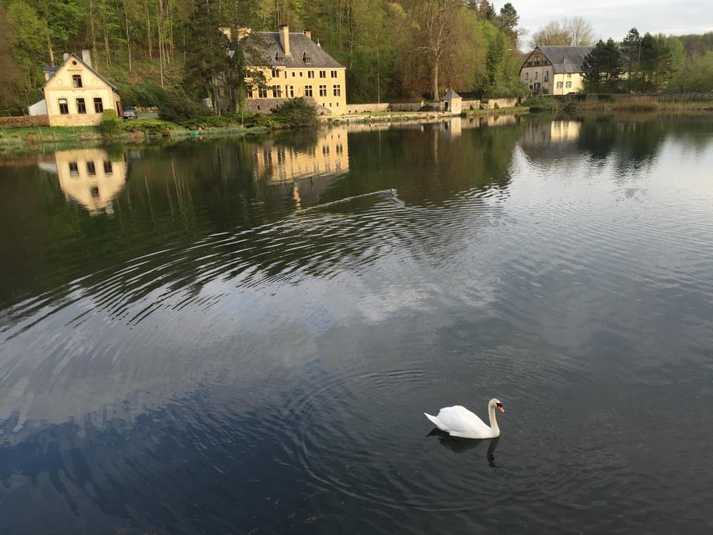 orval belgium swan