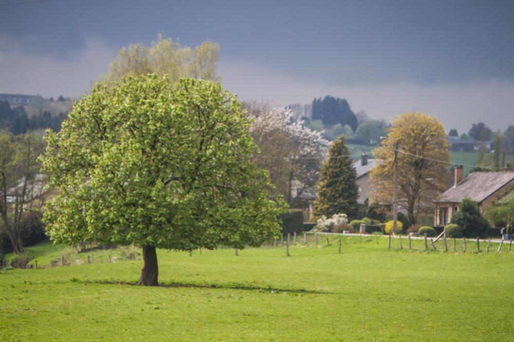 rural tree Belgium