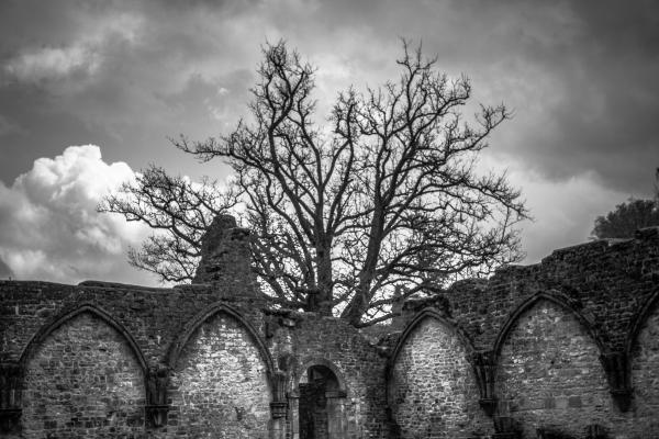 abbey ii