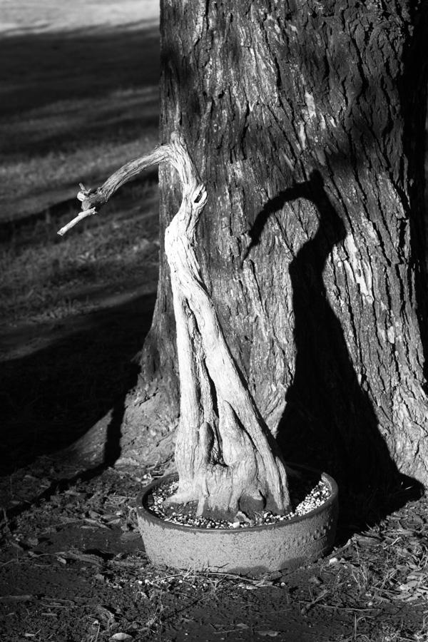 bonsai shadow