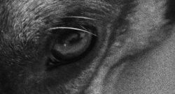 closeup dogs eye