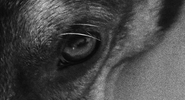 closeup dogs eye