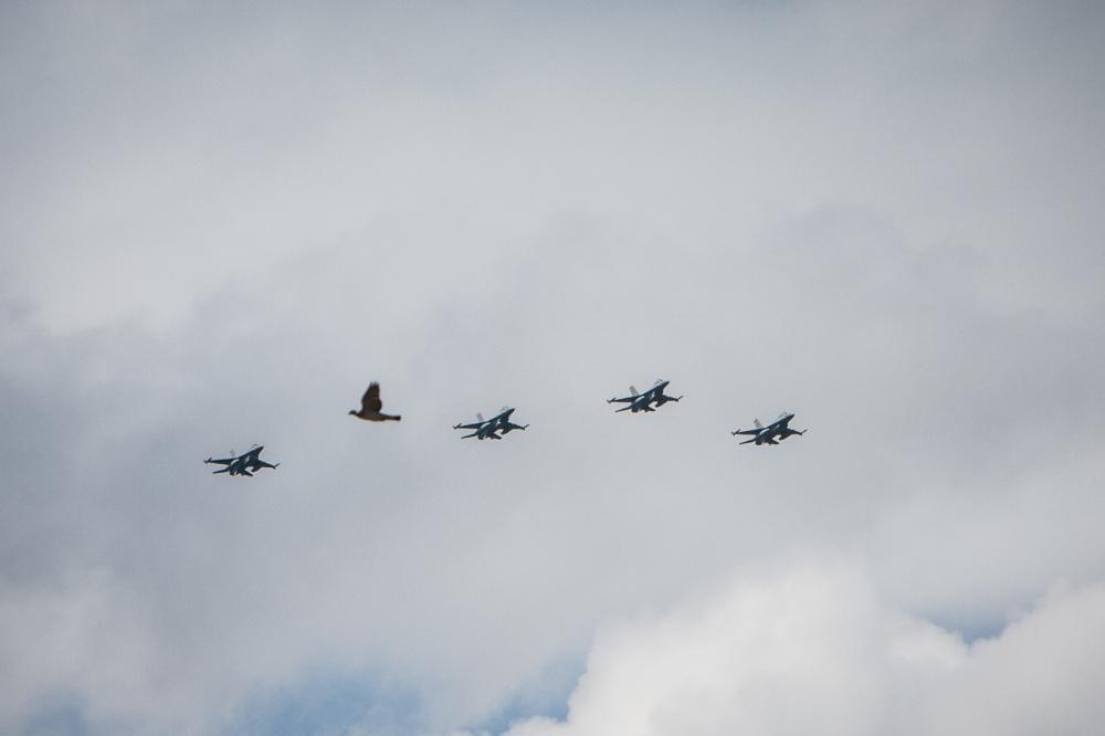 pigeon jet