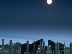 blue hour with horses and supermoon