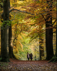 leaf walk belgium