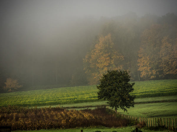 Belgium autumn fog