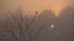 bird sunrise