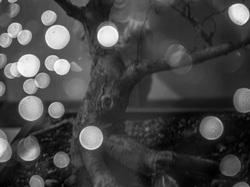 multi exposure tree