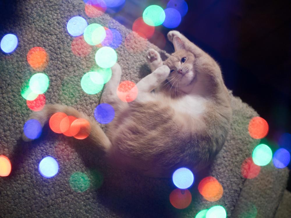 2016 party cat