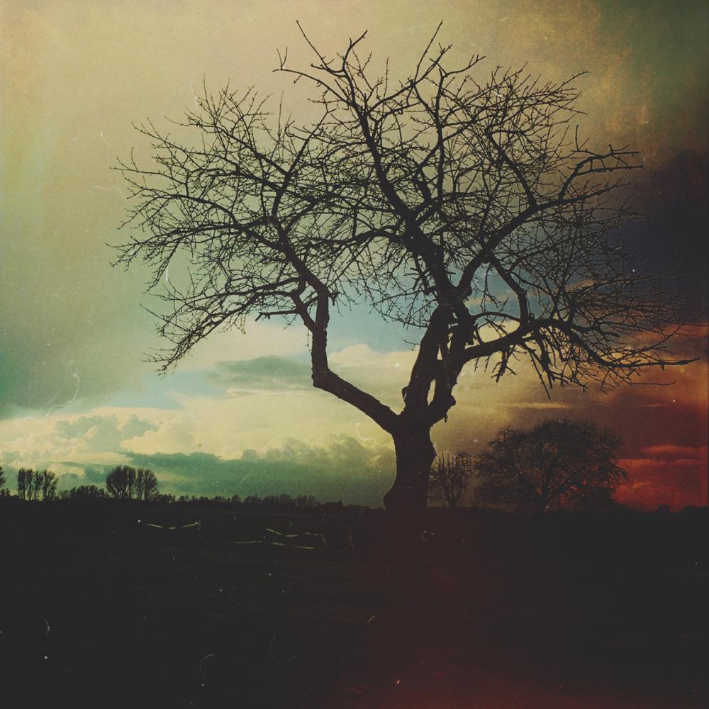mextures tree