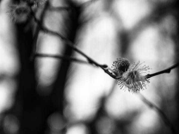 prickly blooms II