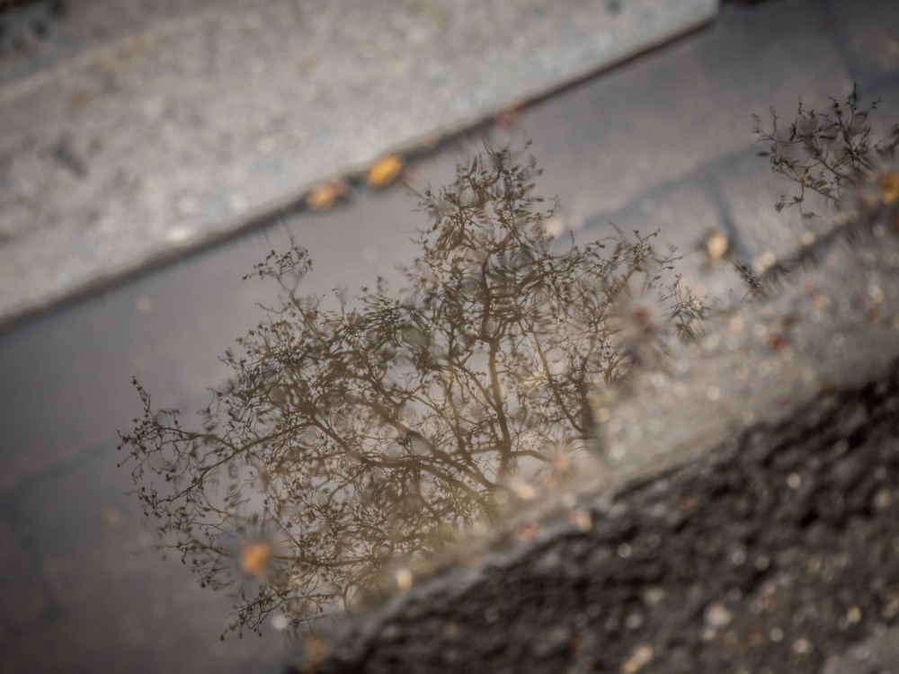 leuven puddle reflection