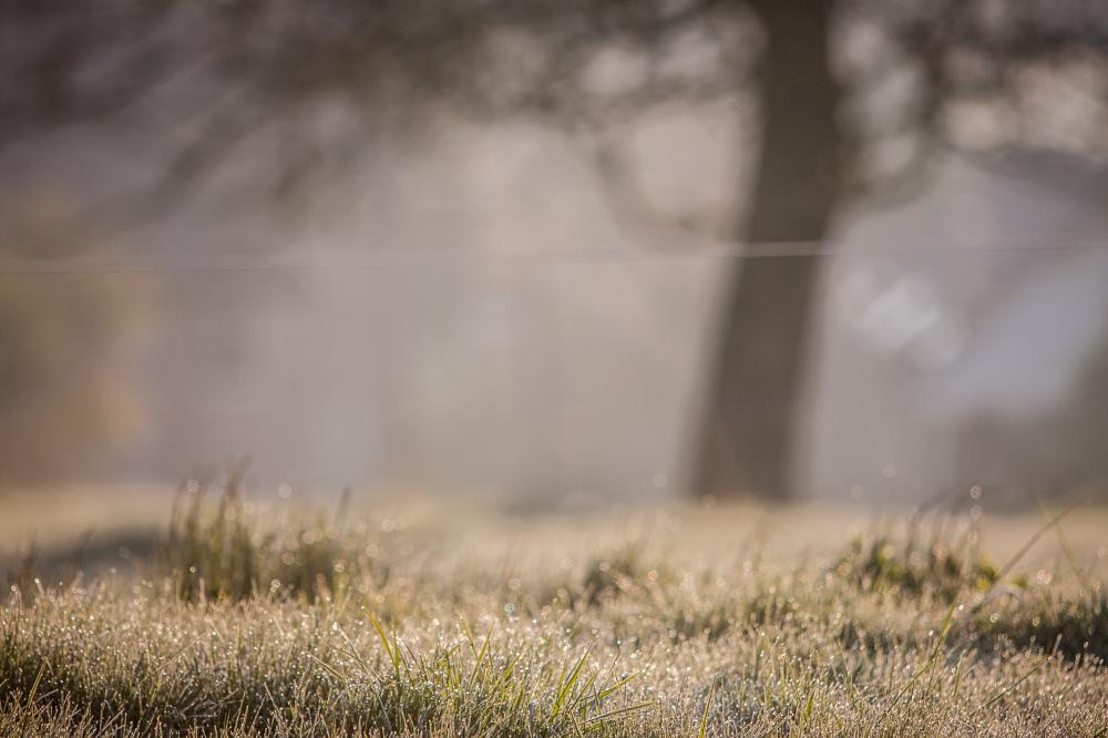 late april frost belgium