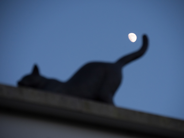 moon twilight cat
