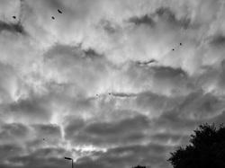 crow clouds