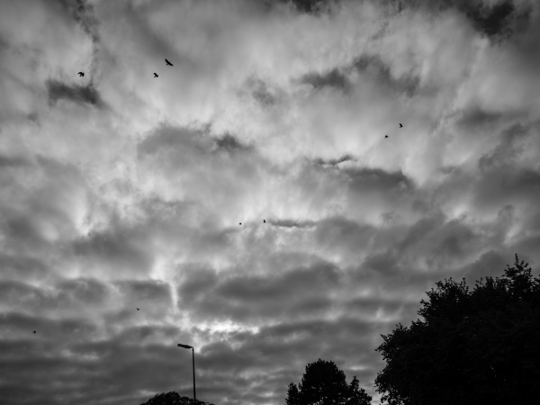 crow clouds