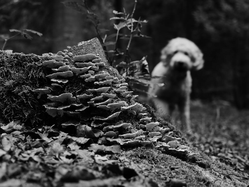 mushroom tree dog