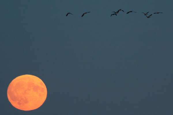 full moon fly by