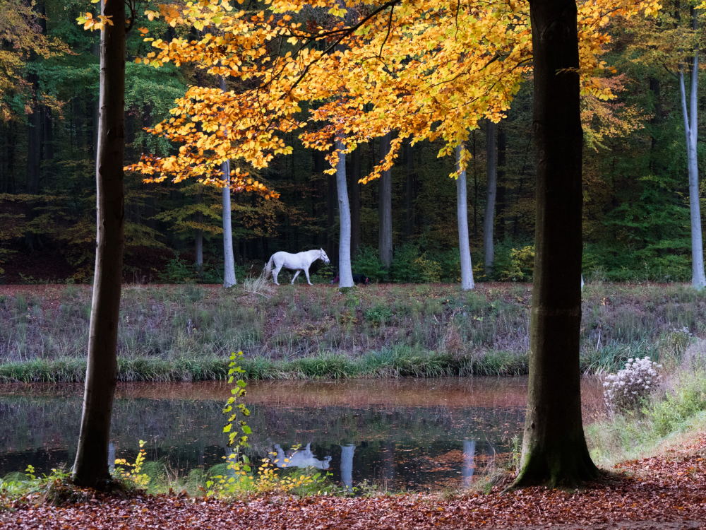 autumn horse reflection