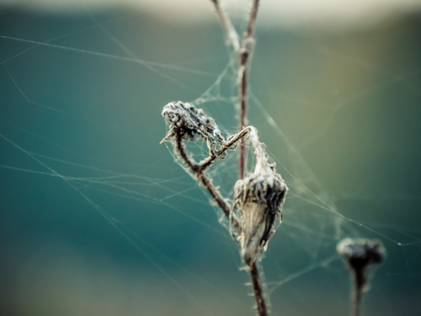 strings of decay