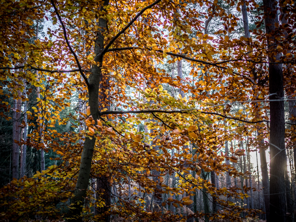 last weeks of autumn