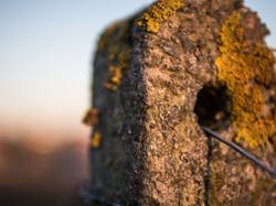 lichen fence posta