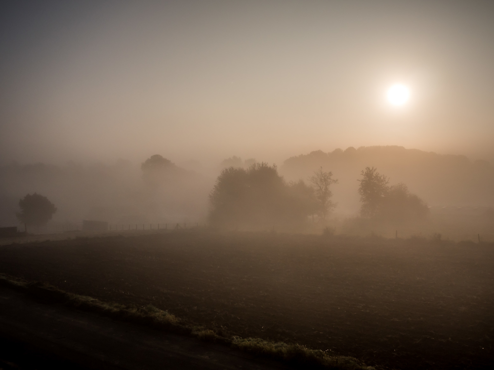 foggy sunrise field