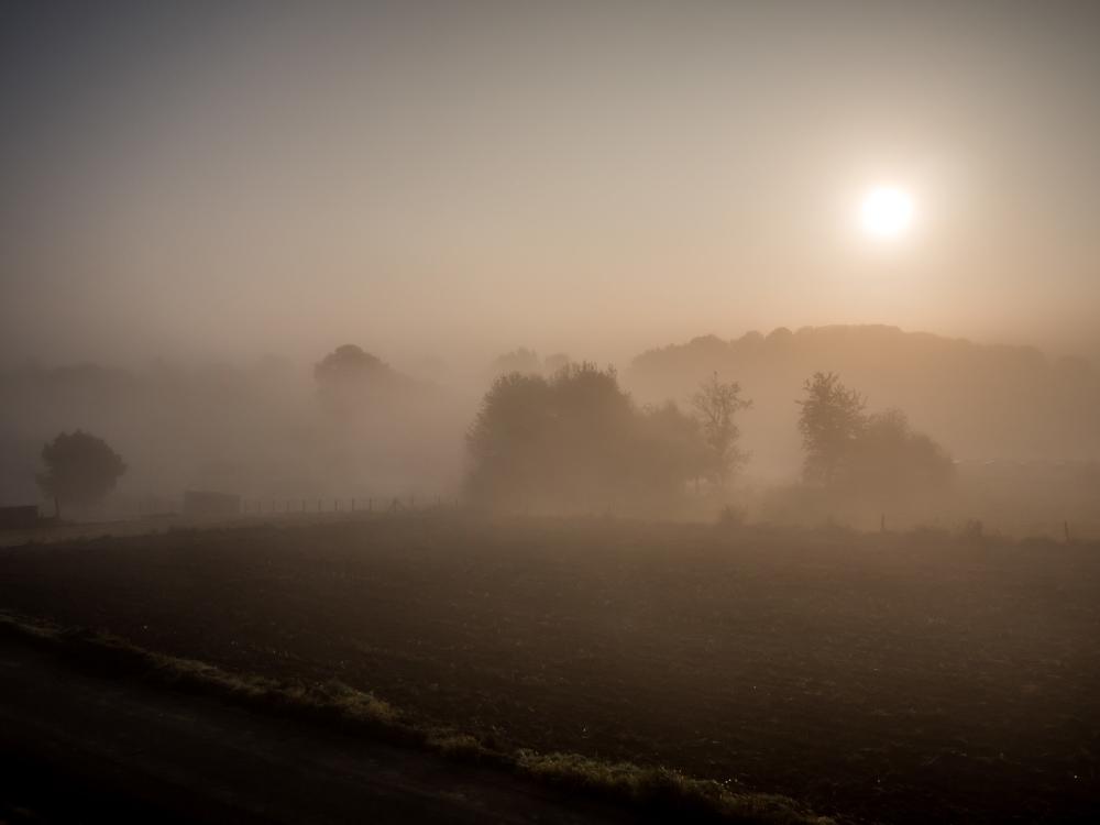 foggy sunrise field
