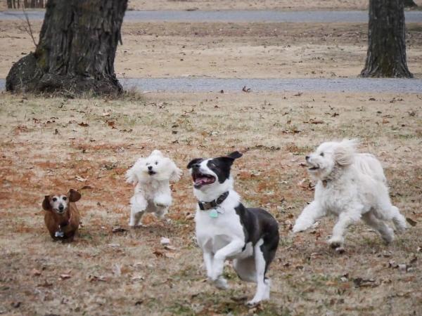 dog play