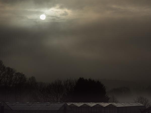 winter sun in Belgium