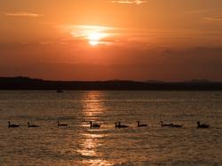 Lake Lawotnka sunset ducks