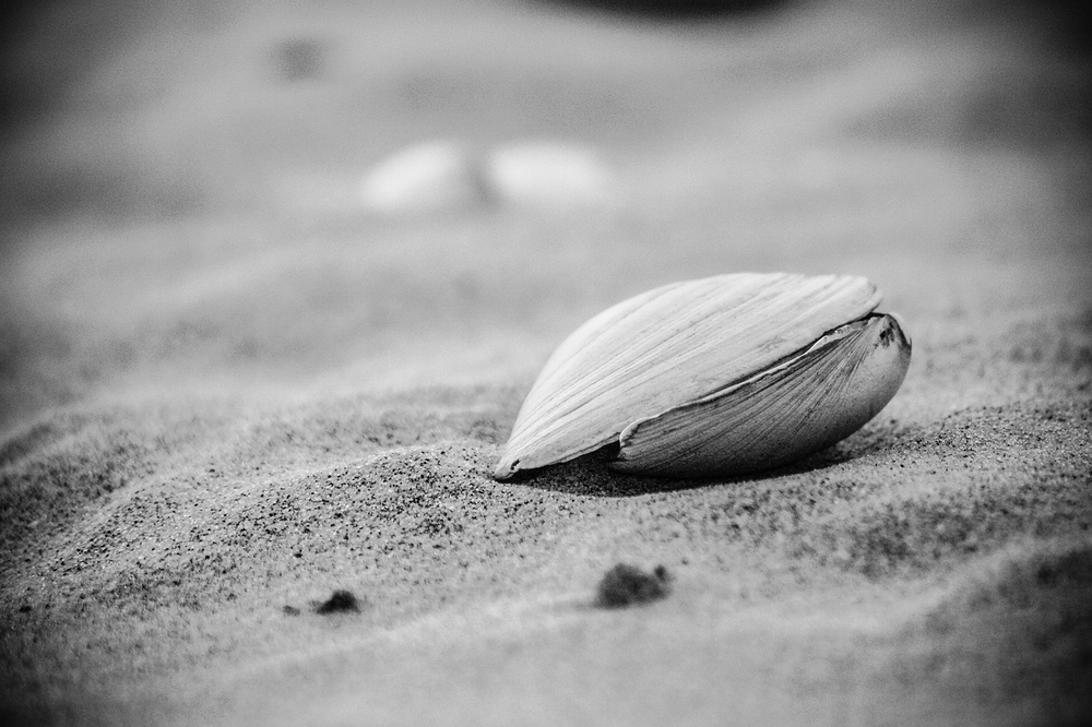 black and white clam shell