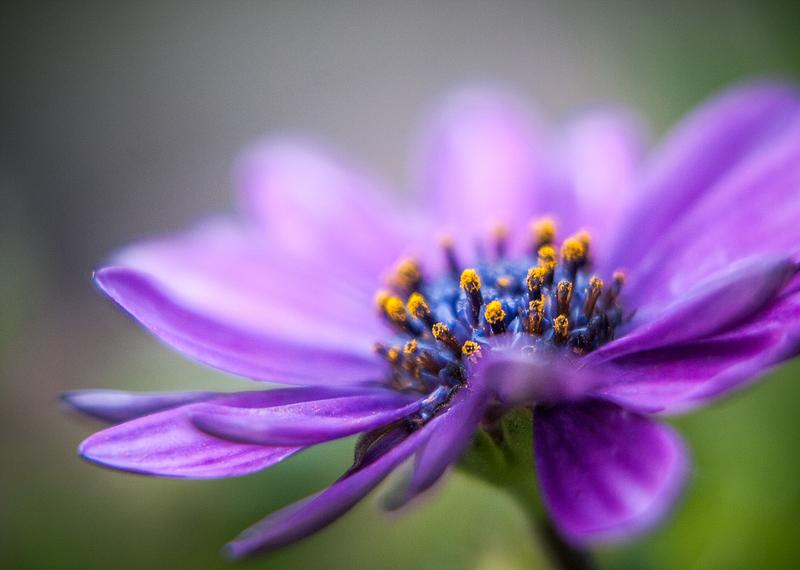 poles of pollen