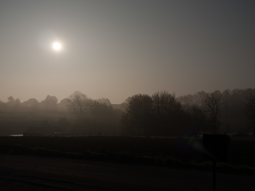fog tree sun