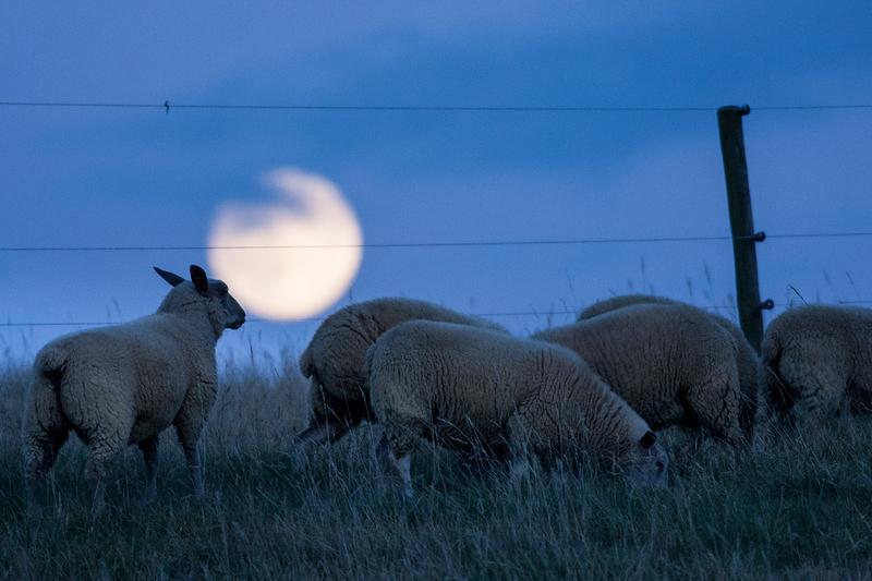 moonlight graze (part II)