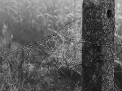 Autumn's Web
