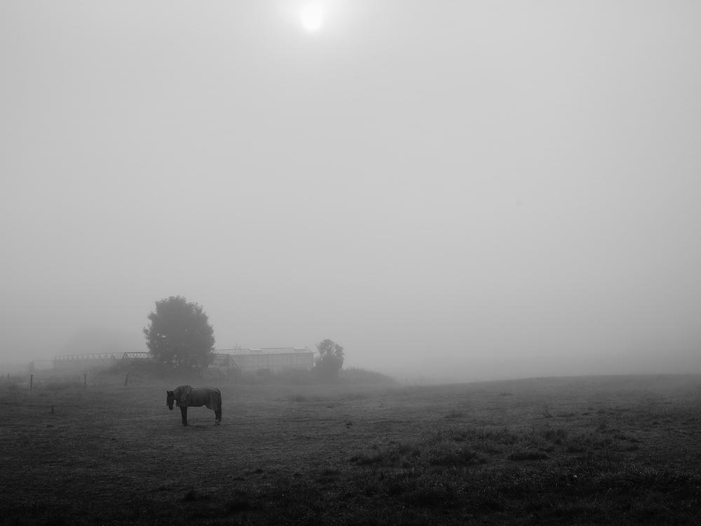 horse in fog