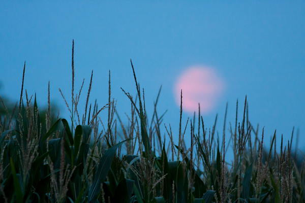 full moon corn