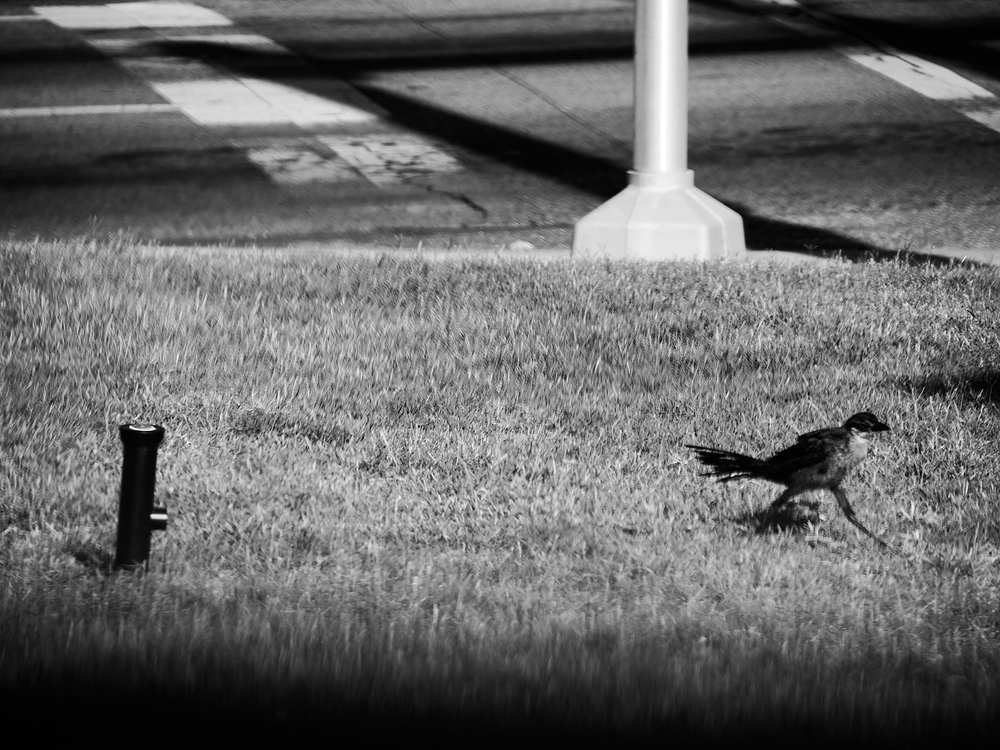 bird oklahoma city
