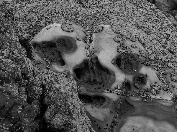 bone coral