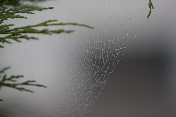 soft web fog