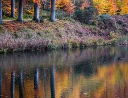 autumn in Tervuren