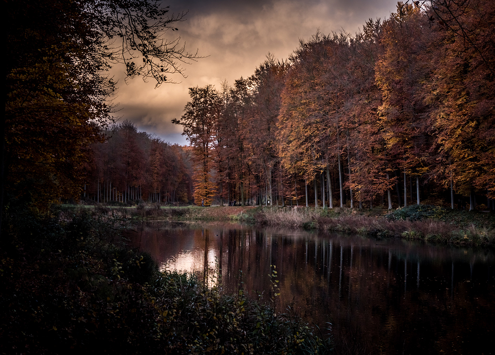dark tervuren forest